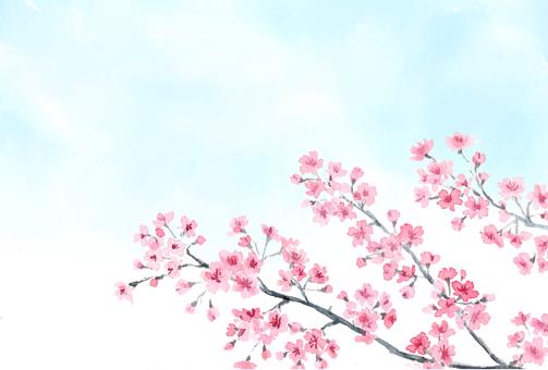 Sakura sky postcard size