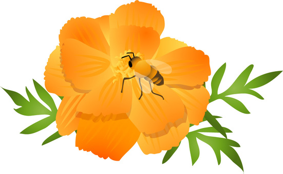 Yellow cosmos and bee