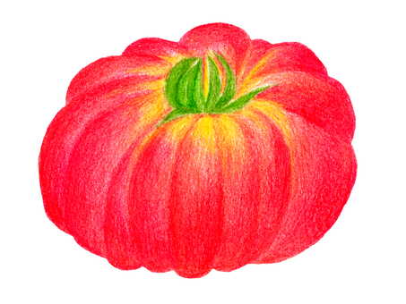 Italian tomato 01 (color pencil drawing)