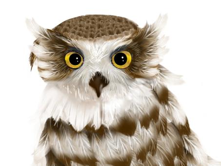 Shima Owl ⑥