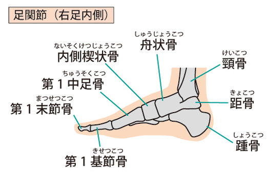 Inside the ankle joint