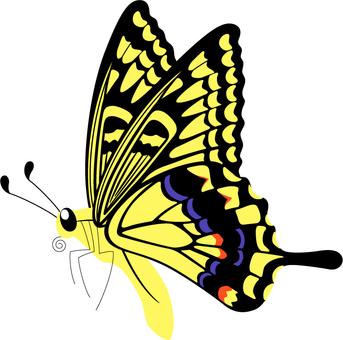 Swallowtail butterfly _ single item