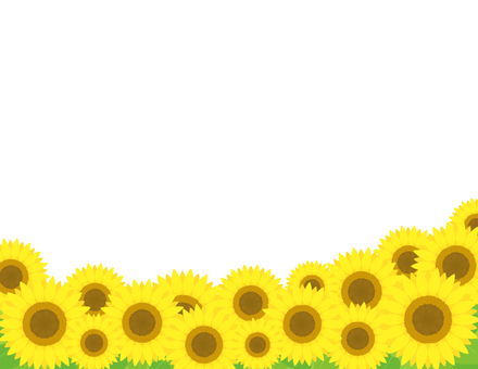 Sunflower background _ Sunflower