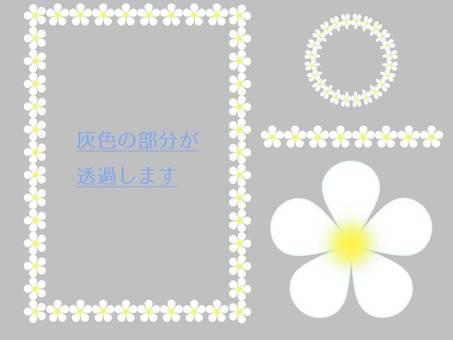 Plumeria style set