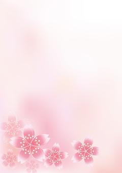 Sakura Sakura 5
