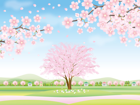 Spring landscape with cherry blossoms in full bloom Part 2