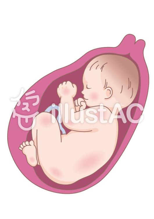 胎児(妊娠後期)のイラスト