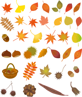 Fall leaves of autumn