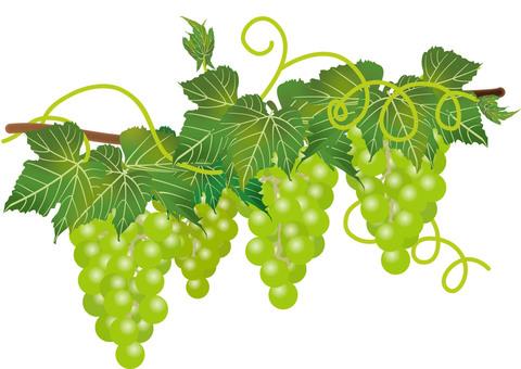Delicious grape 5
