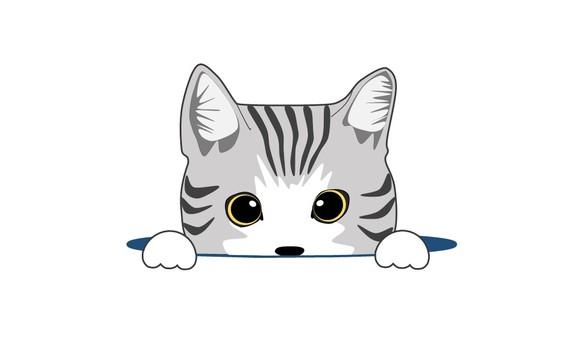 A little cat gray