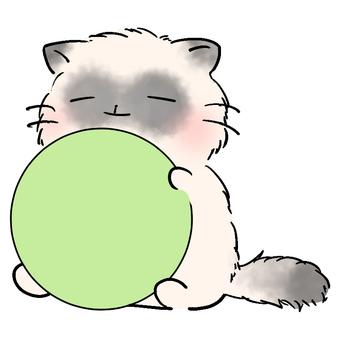 Kittens Play 3