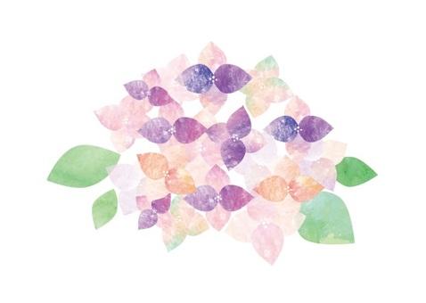 Watercolor hydrangea two colors