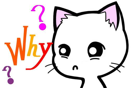 Why Why Cat English