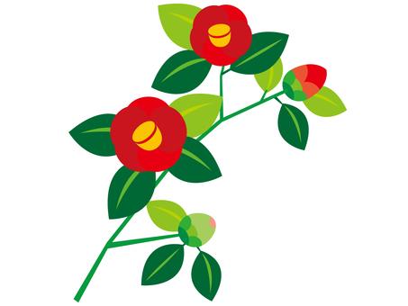 Camellia _ 1
