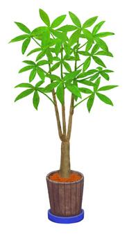 Houseplant 2