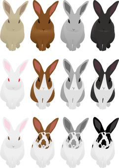 Rabbit 07