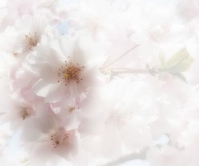 Flower message card 6-A