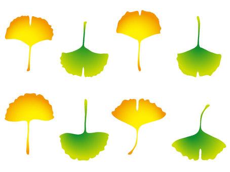 Ginkgo biloba leaves -2