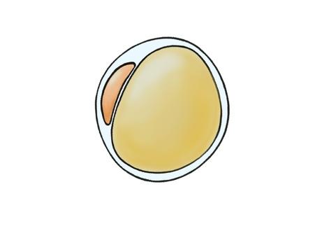지방 세포