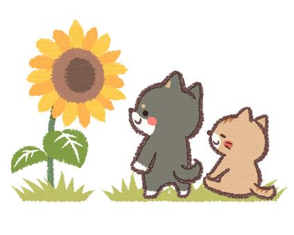해바라기와 黒柴 개 고양이