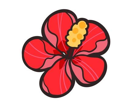 Hibiscus illustration material