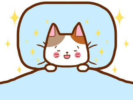 잠 고양이 씨