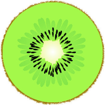 Cross section of kiwi (with skin)