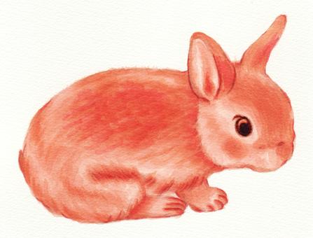 Rabbit chako (child rabbit)