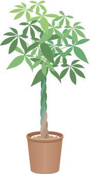 観葉植物 パキラ イラスト