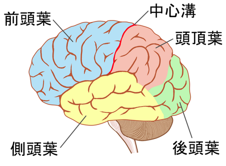 Cerebral site, name