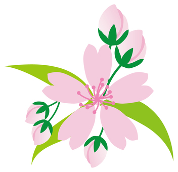 h28 Sakura material 23