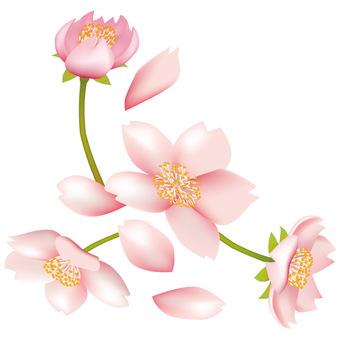 Spring · Sakura · Sakura 03