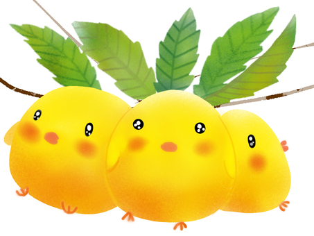 비파 (비파) 병아리