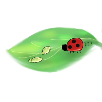 Aphids and ladybugs