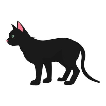 Cat - Black Cat
