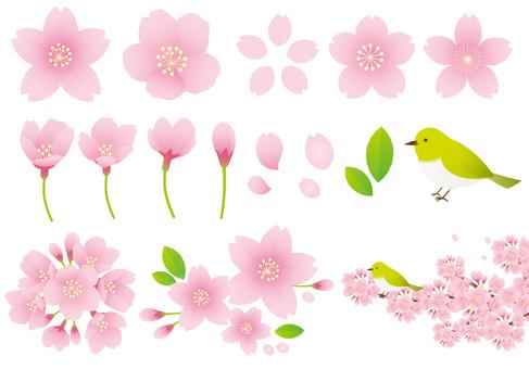 Conjunto de Sakura