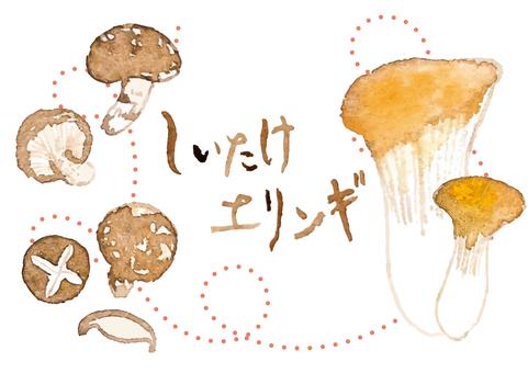 """Watercolor"" shiitake ・ Eringui"