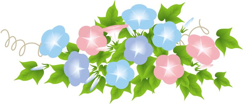 핑크 & 블루 보라색 나팔꽃 4