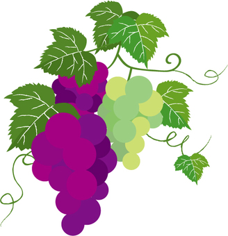 Grape leaves and vines Simple