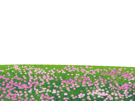 Plants of a flower of grass plains Grassland scenery 05