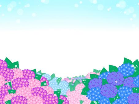 Background hydrangea (mixed)