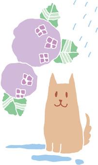繡球花和狗