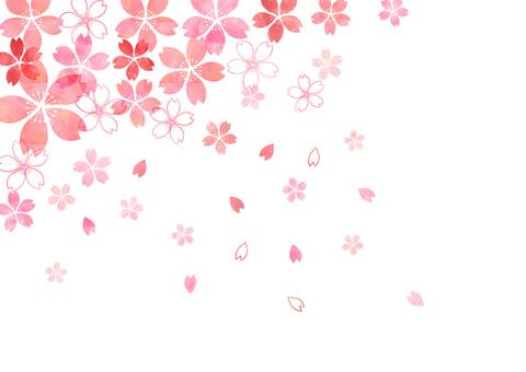 Sakura _ diagonal _ pastel background 1821