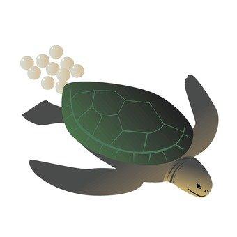 Turtle 15