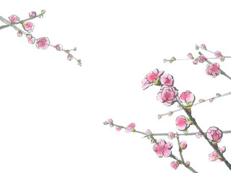 복숭아 꽃 8