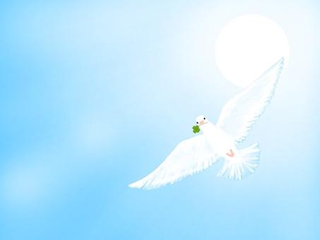 Sky and pigeon series!