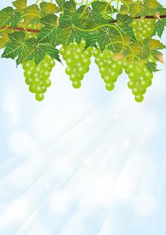 Aozora & Grape 1