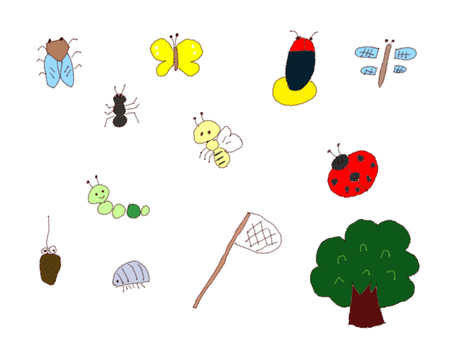 Assorted insects