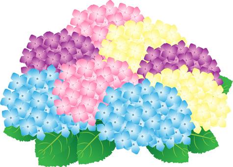 Ajisai mixed color