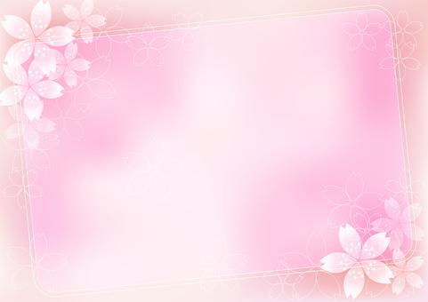 Sakura Sakura & Board 23